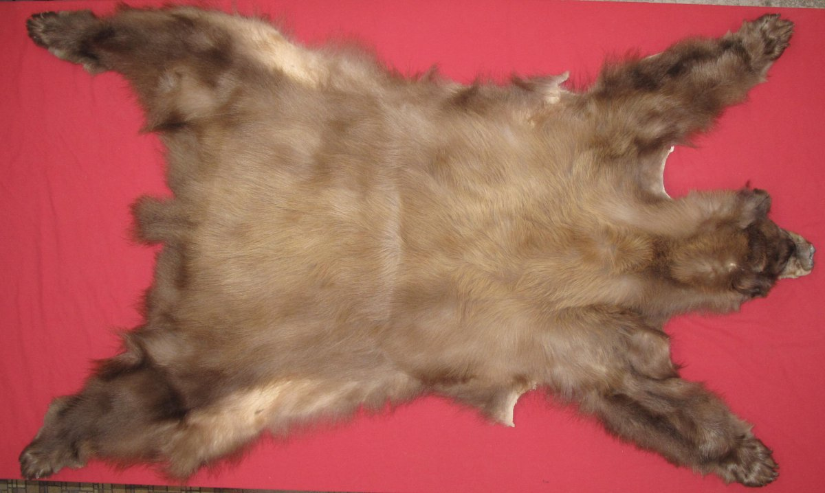 06a4c8314d066 Tanned Complete Black Bear Hides, Furs, Pelts, Skins for sale by www ...